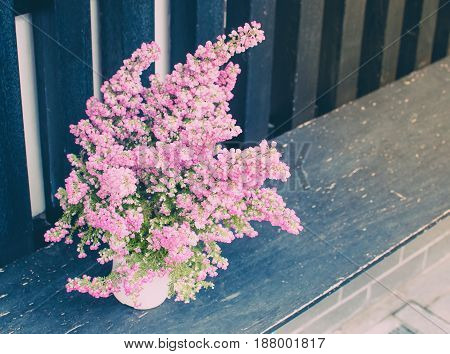 Beautiful pink flowers on the terrace. With place your text