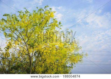 Beautiful yellow flowers with sky and clouds background.