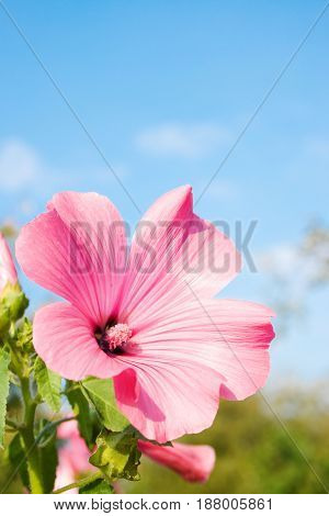 Pink flower on the sky day background