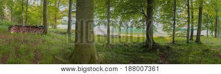 Germany: Panorama Of Forest In Lower Saxony
