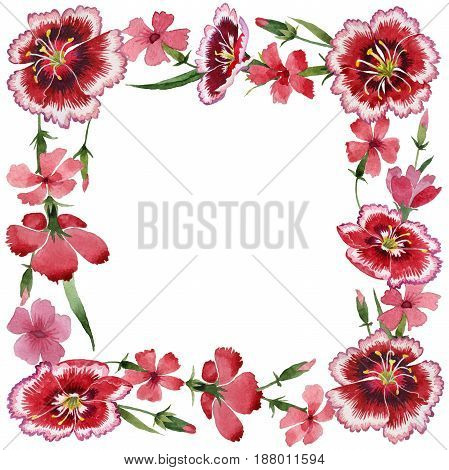 Wildflower carnation flower frame in a watercolor style isolated. Full name of the plant: carnation garden. Aquarelle wild flower for background, texture, wrapper pattern, frame or border.