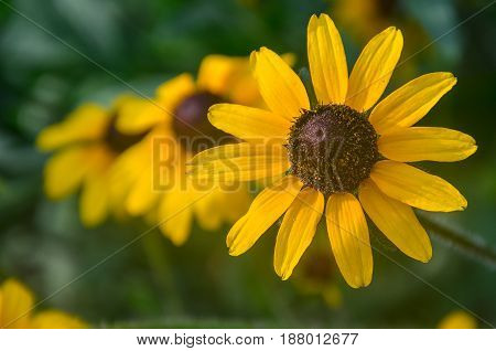 Beautiful composition of sunflowers arranged in a row. Show made in garden, green natural background