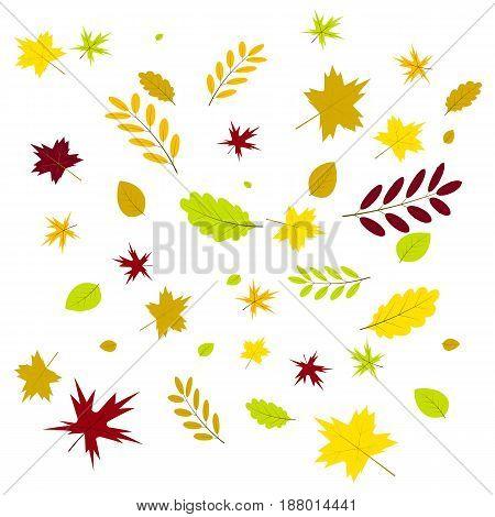 autumn leaves of oak, birch, rowan, maple, ash