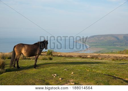 Exmoor national park view with pony looking towards Porlock Somerset coast on a summer evening