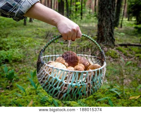 Girl holding a basket with mushrooms in her hand