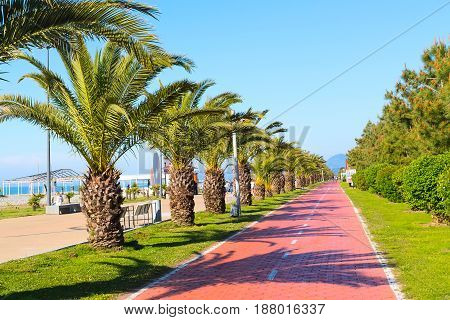 Park with palm trees near promenade of Batumi, Georgia and bicycle road