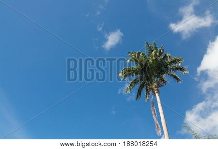 A tall palm tree under nice sky with copy space