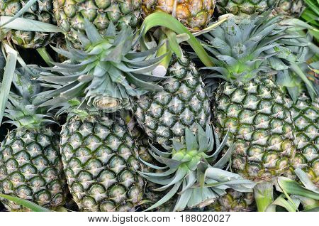 Pineapples At The Village Market