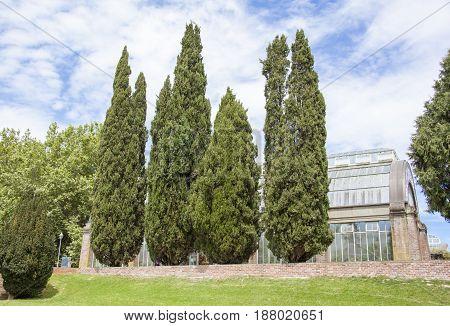 Auckland Domain public park and winter garden (New Zealand).