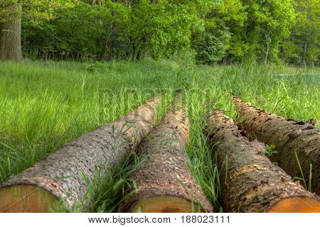 Germany: Logs In The Forest In Lower Saxony
