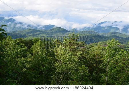 Tsali mountain and treed area in Almond NC