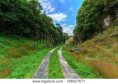Short walking track in Waitamo North Island of New Zealand