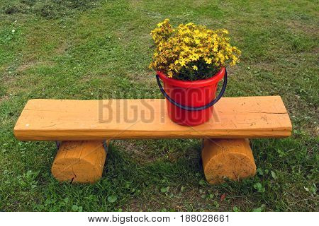 Red plastic bucket with wild medical St Johns wort flowers on wooden bench