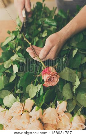 Florist hands closeup, cuts rose for bouquet in flower shop. Man assistant or owner in floral design studio, making decorations and arrangements. Flowers delivery, creating order