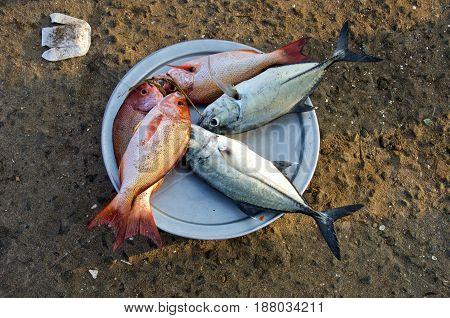 Fresh ocean fish in Kanyakumari beach market