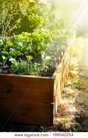 Spring green garden in a wooden box under the sun's rays