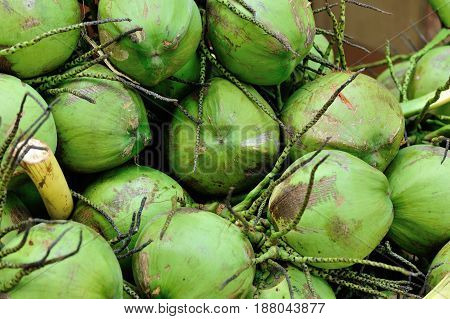closeup of green coconut fruits for sale