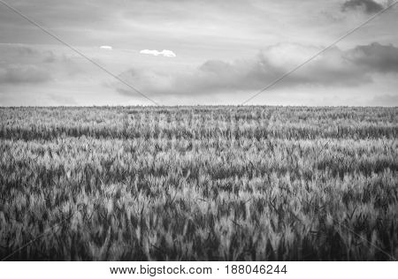 gras landscape with clouds in black and white