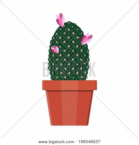 Cactus plant in flower pot. Decoration home plant. Vector illustration in flat style
