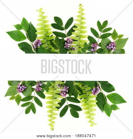 Fresh green leaves borderon white background. Flat lay. Top view.