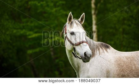 Portrait of the lonely horse in the forest