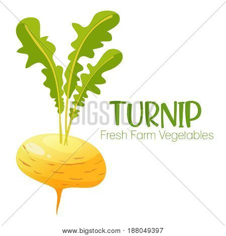 Vector turnip isolated on white background.Vegetable illustration for farm market menu. Healthy food design poster. Cartoon style vector