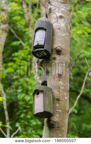 Bat box and bird box attached to tree. Artificial roosts provided for wildlife hanging from trunk of ash tree in British nature reserve