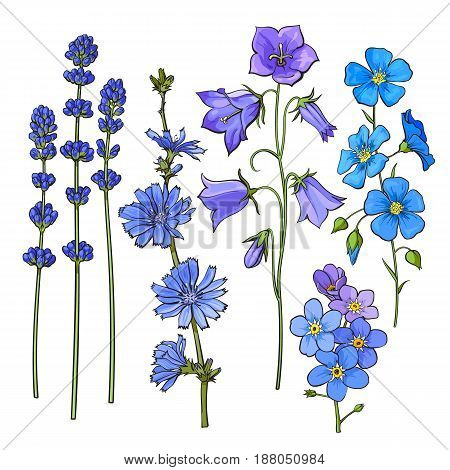 Set of hand drawn blue flowers - lavender, forget me not, bell, cornflowers, sketch style vector illustration isolated on white background. Realistic hand drawing of blue meadow flowers
