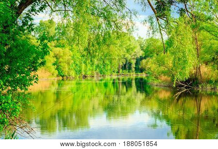Magic nature brightly reflected in the river beautiful colors excellent background around clean ecology