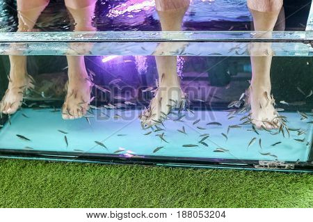 Fish spa feet pedicure skin care treatment with the fish rufa garra also called doctor fish nibble fish and kangal fish.
