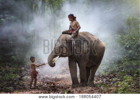 Elephant and mahout in village surin thailand an elephant is like a family.