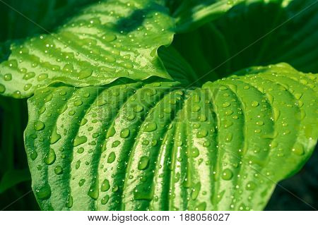 green leaf in the garden with water drops