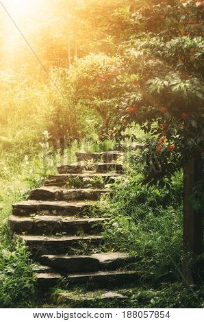 Stone stairs in the park with green trees and grass. Sun is shining. Natural travel concept