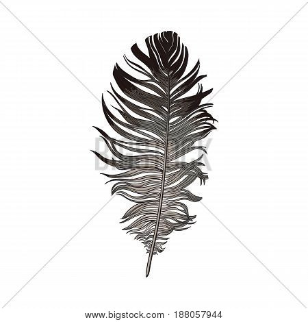 Hand drawn smoth black and grey dove bird feather, sketch style vector illustration on white background. Realistic hand drawing of grey bird feather