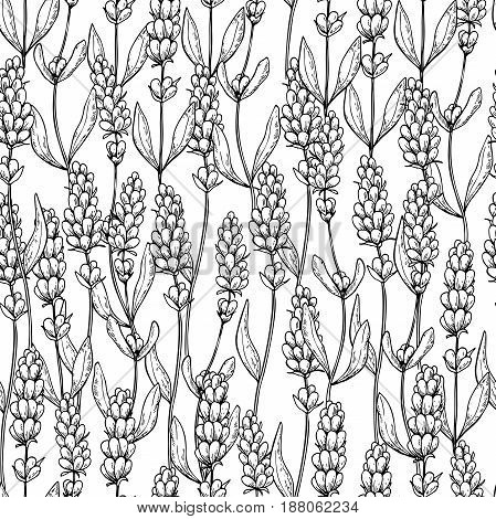 Lavender vector drawing seamless pattern. Isolated  wild flower and leaves. Herbal engraved style background. Detailed botanical sketch for organic cosmetic, medicine,  beauty store, perfume,