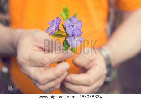 Male hands holding a small bouquet of blue flowers.