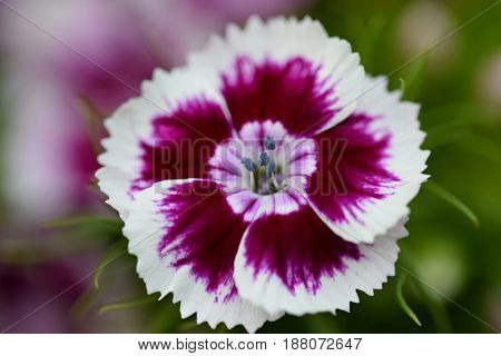 Macro shot of small purple and white flower petal and colour shape like small tornado