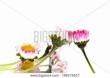 Summer Floral Composition
