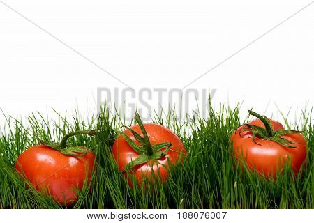 Fresh Vegetable Concept, Tomatoes On Green Grass On White