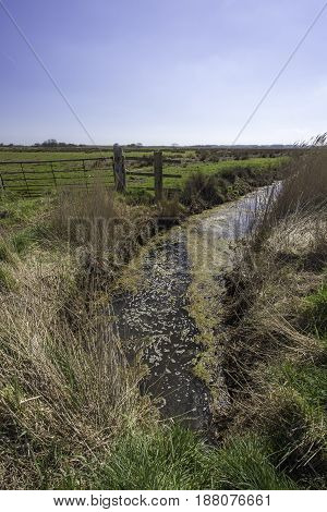 Farmland irrigation trench. Grazing land with fence bordered by drainage ditch with surface algae.