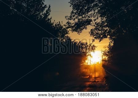 Abstract Evening city sunset, dark silhouettes of trees, dusk in sunlight, copy space