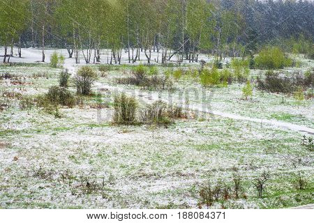 Blizzard in the spring. Green and snowy abstract landscape with flying snow. Cooling and climate change concept