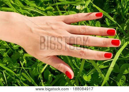 Woman hand with bright red nails against green grass. Beauty in nature concept