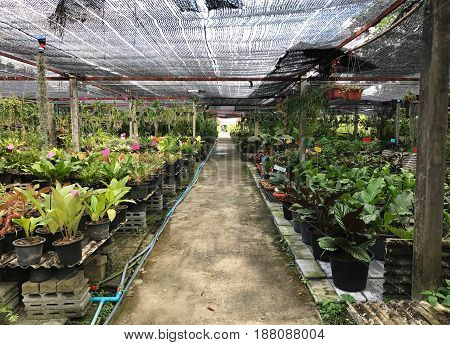 Plant nursery - agriculture and business concept