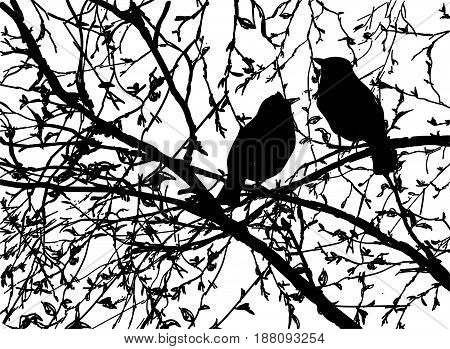 Vector silhouettes of birds at branch tree, Hand drawn,  bird sitting on branch isolated on white background.