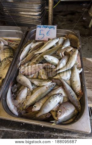 Fresh fish the common pandora (Pagellus erythrinus) in the tray. Fish market in Heraklion. Crete. Greece.