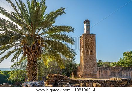 Chellah (Sala Colonia) - Minaret of mosque ruins - Rabat Morocco