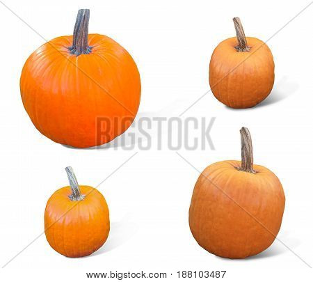 Pumpkin cut collection isolated on white clipping path. Pumpkins isolated on white background. Fresh and orange.Top view of a pumpkins isolated for Halloween, Thanksgiving day, other autumn Holidays.
