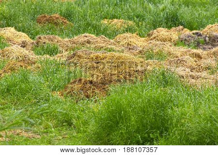 detail of manure in a meadow in la spezia
