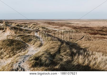 Sand dunes and high grass in Denmark